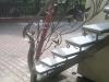 img00630-20110702-1034
